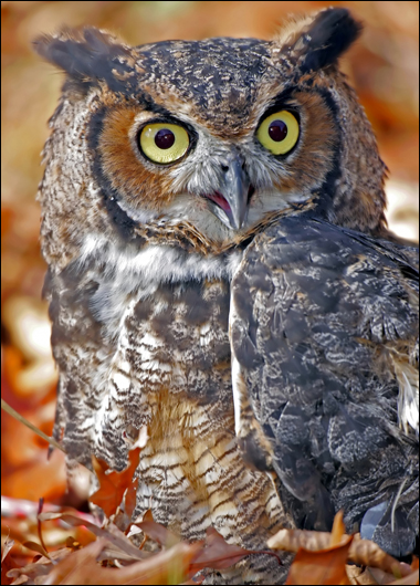 Of Owls and Resistance � March