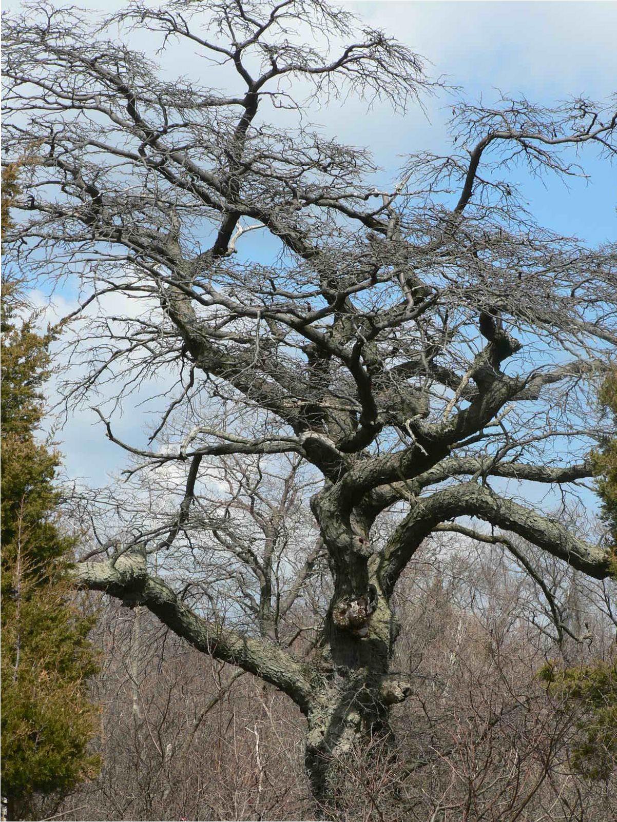 Our Favourite Tree Guide: Trees Of The Carolinian Forest