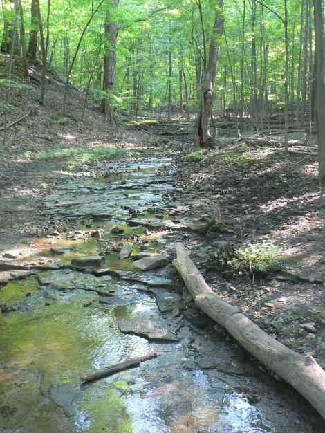 spencer creek watershed