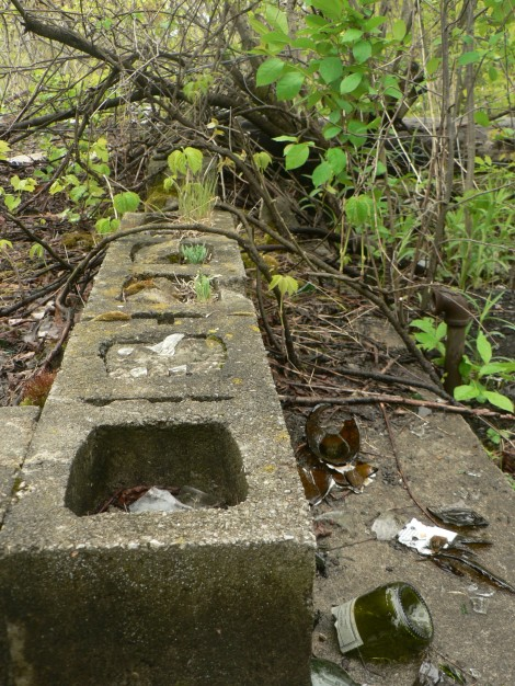 Cinder Blocks Growing Wild